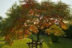Essigbaum im Herbst
